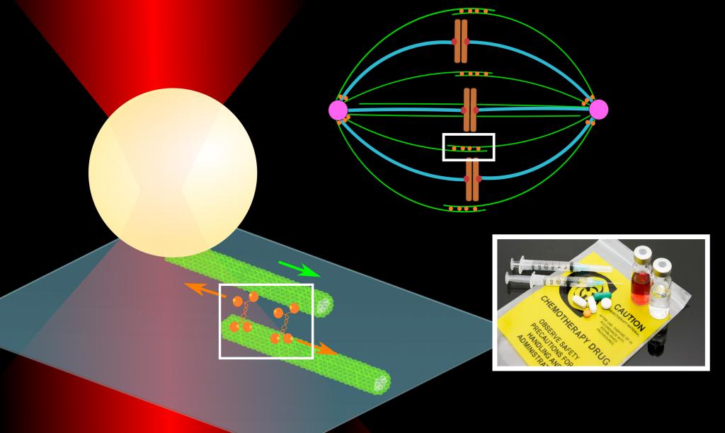 opticalTrap_higherSystem_chemo